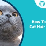 HOW TO STOP CAT HAIR LOSS