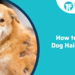 How to Stop Dog Hair Loss